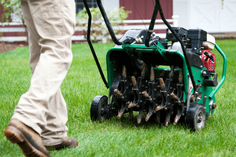 Lawn Aeration & Overseeding