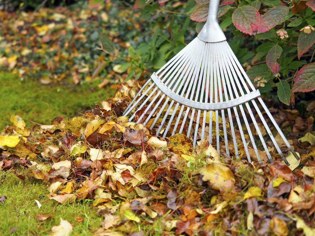 Spring/Fall Cleanups