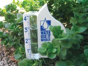 tree and shrub watering tips